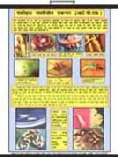 Educational Laminated Agriculture Charts Infotech