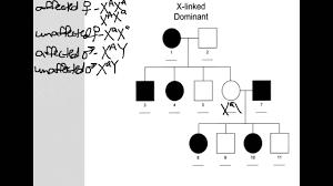 X Linked Dominant Pedigree