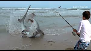 Image result for pictures of fishing