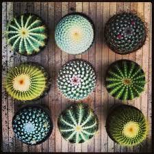 Small Picture Best 25 Cactus ideas on Pinterest Cactus images Cactus plants