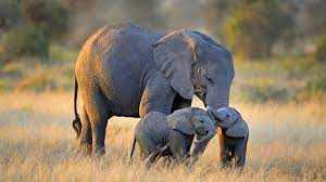 Elephant Hd Wallpapers Free Download