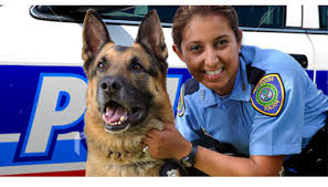 if youve always thought that becoming a k9 police officer would be a unique and exciting career choice youre barking up the right tree cbp officer job description