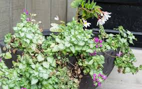 fall planter ideas spent summer container