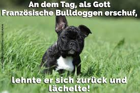 Französische Bulldogge Zitate Und Sprüche