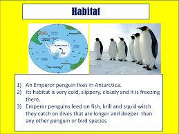 emperor penguin habitat map. Brilliant Map 3 Habitat  To Emperor Penguin Map T