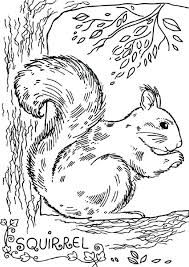 Printable Coloring Pages Of Squirrels Red Squirrel Coloring Page