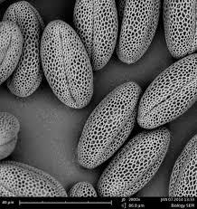 Tem Microscope Microscopy Homepage