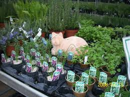 how to grow a herb garden. No Matter What You\u0026#x27;re Growing, You Should Probably Buy Them As How To Grow A Herb Garden