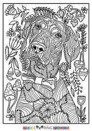 Small Picture Free printable Golden Retriever coloring page Booker available
