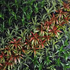 greenwalls brisbane office plants