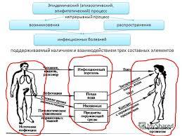 Презентация на тему Основные инфекционные заболевания и их  3 поддерживаемый