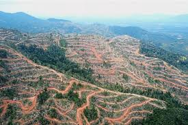 Stop All Illegal Logging Nation The Star Online