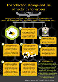 Bee Behaviour Chart Winter Studies How Honeybees Use Nectar Pollen Propolis