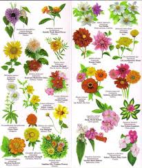 Flower Species Chart Pin By Jamie Lindow On Flowers Flower Images With Name