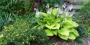 the advantage of a perennial garden is the nonstop selection of diffe plants whether you re looking for a brightly coloured rainbow of flowering plants