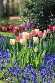 planning a beautiful spring bulb garden