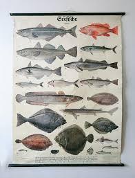 Saltwater Fish Chart Huge Original Zoological Vintage German School Wall