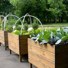raised timber vegetable planters