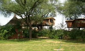 tree house jaipur. Tree House Resort, Jaipur. Jaipur