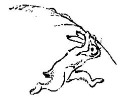 鳥獣戯画 ウサギ ドライtシャツ 新品 グッズ 即決