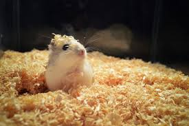 what to use for hamster bedding best