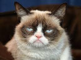 grumpy cat good smile. Fine Cat Mostpopularcatsgrumpycat4 In Grumpy Cat Good Smile