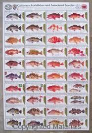 Rockfish Identification Chart Pin On Gone Fishin