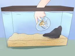 Come mettere dei pesci in un nuovo acquario wikihow