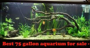 top 10 best 75 gallon aquarium for