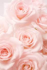 Light Pink Flower Wallpaper Aesthetic