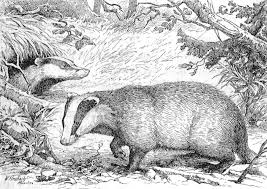 Small Picture Coloring page badger img 9767