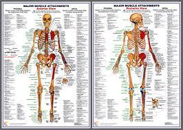 Anatomy Wall Posters Vintage Medicine Human Anatomy Posters