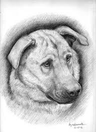Meticci Disegno Libero Con Disegni Di Animali A Matita Facili E Thor