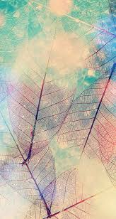 screen background image handy living: imagem de leaves and wallpaper  imagem de leaves and wallpaper