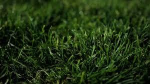 grass at night texture. Wonderful Texture Wet Grass Photo To Grass At Night Texture