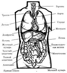 Органы и системы органов Органы организма человека
