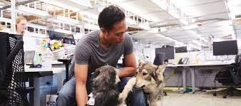 google employee with two dogs in the office