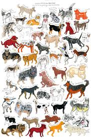 The Art and Life of Janna Morton: Cats & Dogs and Dogs & Cats