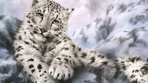 Snow Leopard HD Wallpapers - Wallpaper Cave