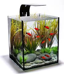 office desk fish tank. Ecoxotic EcoPico Desktop Aquarium System With LED Arm And Filter, Office Desk Fish Tank S