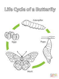 Painted Lady Butterfly Life Cycle Coloring Pages L