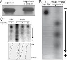 phosphorylated proteins