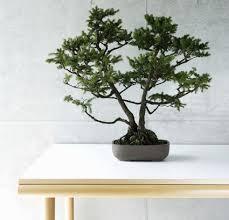 feng shui plant office. Are Bonsai Tree Plants Bad Feng Shui? Shui Plant Office