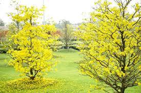 2 lễ hội hoa Xuân 'không thể bỏ lỡ' ở Vinhomes - VietNamNet