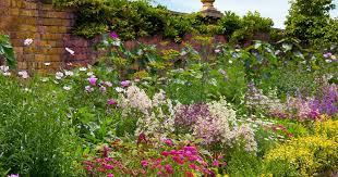 17 flowering perennials that will grow