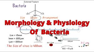 Bacteria Classification Morphology Of Bacteria Bacteria Morphology Classification Structure Microbiology