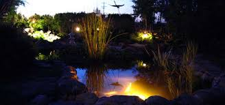 Koi pond lighting ideas Canna How To Design Led Landscape And Pond Lighting Hydrosphere Water Gardens How To Design Led Landscape Pond Lighting Systems The Pond Experts