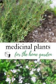 list of herbs to grow in a cinal herb garden herbalism herbgardening herbgarden