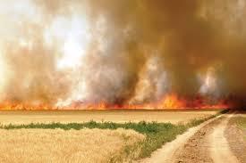 Image result for خسارت آتش زدن بقایای محصولات زراعی