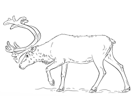 Small Picture Reindeer coloring pages Free Coloring Pages